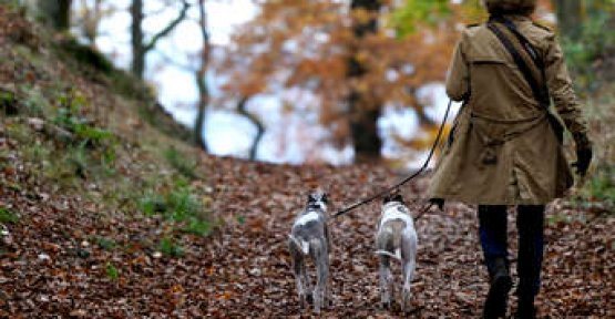 Woman with dogs in the forest for a Walk - that's where a nightmare starts for you