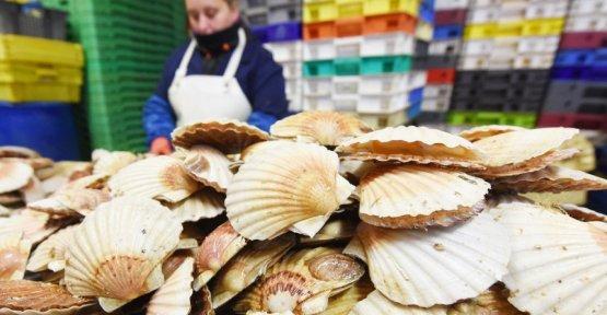 The exploration of the sea: plastic in scallops accumulates