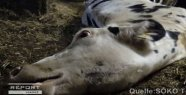 Cruel animal abuse in the Allgäu: Video deeply shocked