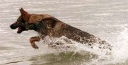 Man drowns dog in the lake - he saw no other...